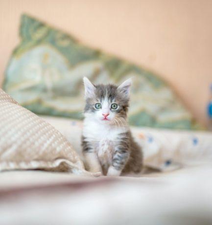 Uudishimu tappis kassi. Aga kuidas see ettevõttele mõjub?